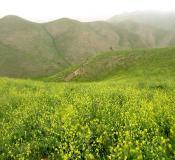 تور ترکمن صحرا تور قبرستان خالد نبی