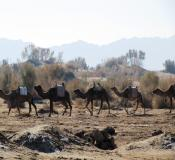 تور کویر مصر، قلعه بیاضه و دریاچه نمک