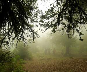 جنگل ارفع ده و چشمه های پراو