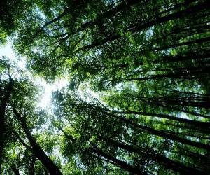 تور یک روزه  |جنگل راش|