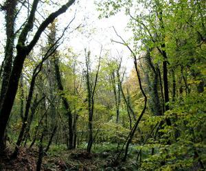 جنگل لاجیم و آبشار ولیلا تور یک روزه