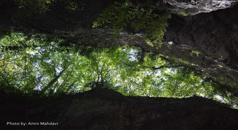 یک سفر ، یک کتاب |همراه با یعقوب یادعلی در جنگل سرپوش تنگه|
