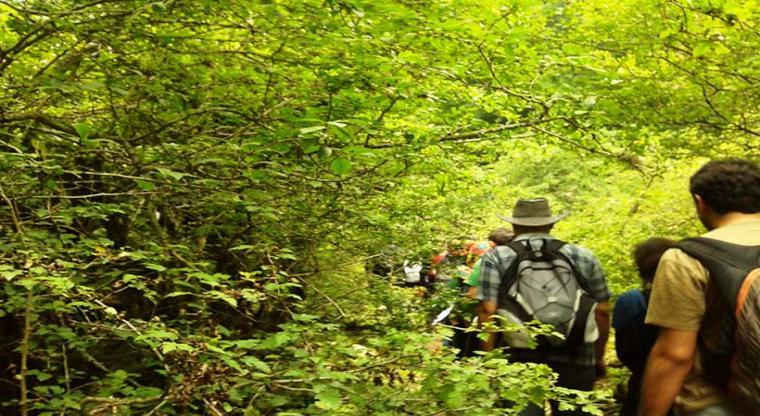 تور یک روزه جنگل ارفع ده و چشمه پراو  در سایه سار جنگل 