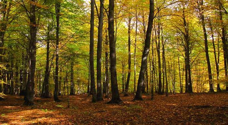 جنگل راش تور یک روزه