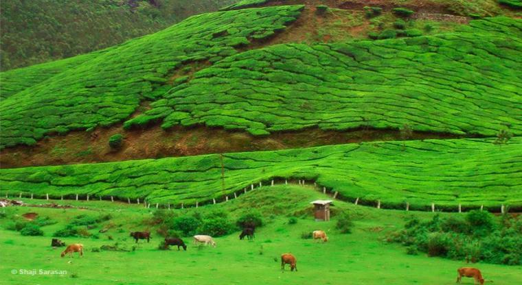 تور طبیعت گردی هند |کوچین،مونار،تک کدی،آله پی|