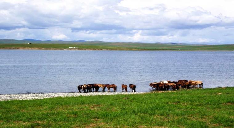 تور طبیعت گردی مغولستان