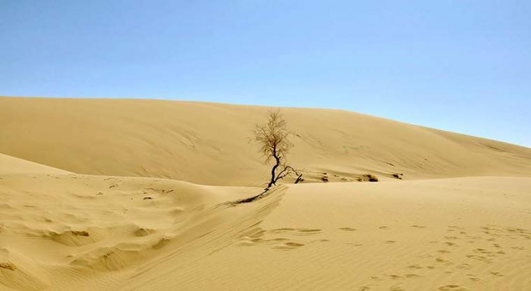 پوشش گیاهی کویر مرنجاب