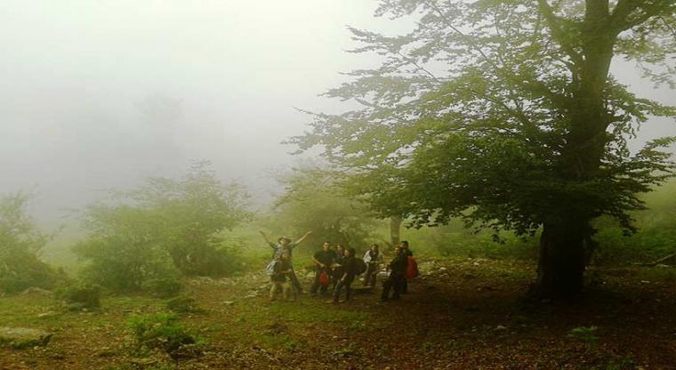 یک سفر یک کتاب |جنگل ارفع ده|