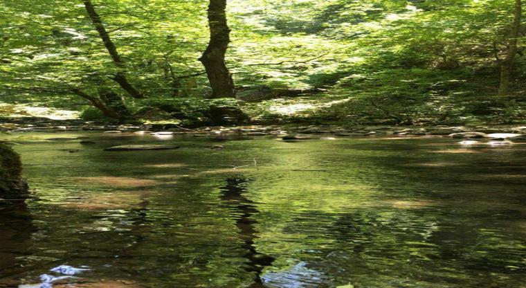 تور آب بازی و رودخانه نوردی آلش دشت
