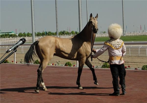 ترکمن صحرا و اسبهای این منطقه