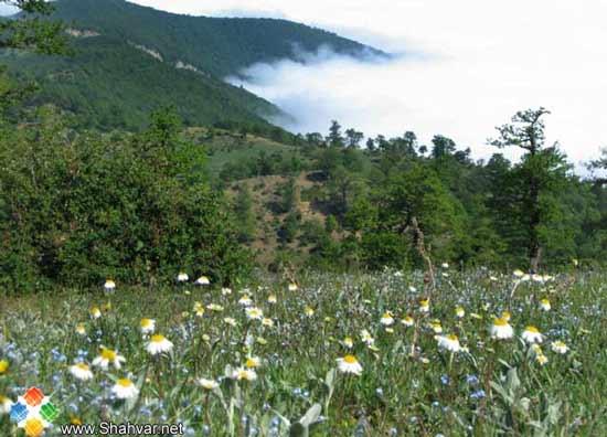 تور جنگل ابر، انتخاب اول تعطیلات