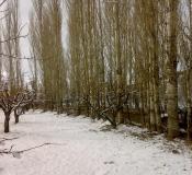 تور جنگل ابر-درخت تبریزی