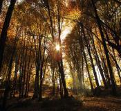 تور جنگل