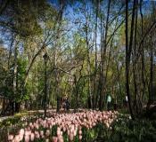 پیشنهاد هفته: باغ ایرانی |همچون قدم زدن با بهار|