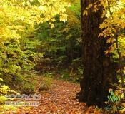تور ایرانگردی، تور جنگل راش