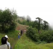 تور جنگل ابر، درخت شیرداد