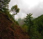 تور تعطیلات  تور جنگل ابر