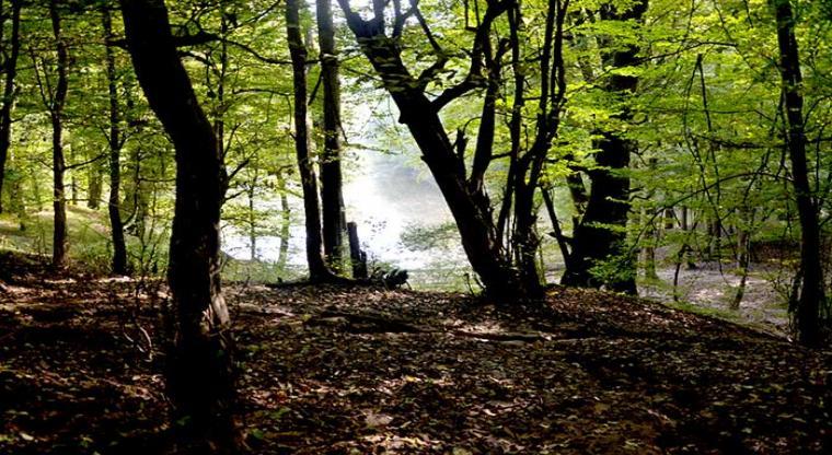 تور جنگل ابر و چشمه های باداب سورت |هفته سوم شهریور|