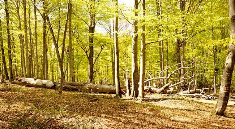 تور یک روزه جنگل راش  تور تعطیلات عید قربان 