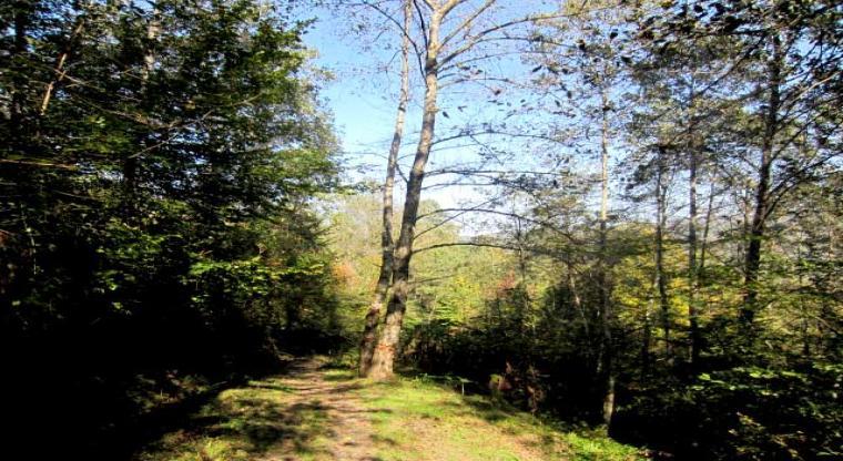 تور جنگل لاجیم و آبشار ولیلا |هفته سوم مرداد|