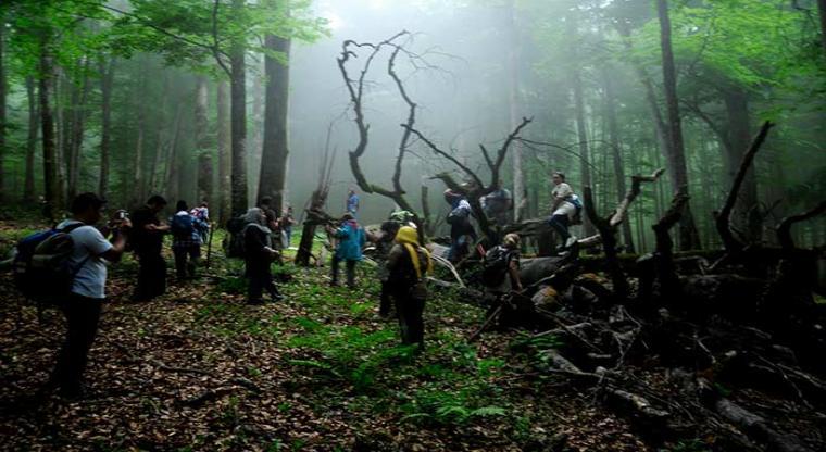 تور یک روزه جنگل راش  هفته چهارم شهریور 