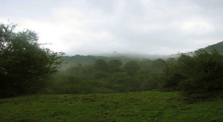 تور یکروزه جنگل الیمستان |هفته چهارم مهر|