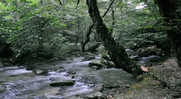 تور رودخانهنوردی در جنگل های دیورش |هفته سوم مهر|