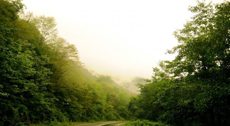 تور جنگل های سیاهکل و آبشار لونک | تور تعطیلات مهرماه|