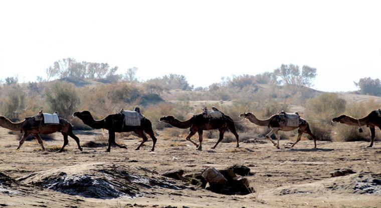 تور کویر مصر  زندگی به رنگ شن زار 