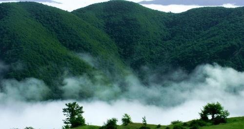 تور جنگل ابر، گذار از جنگلی رویایی
